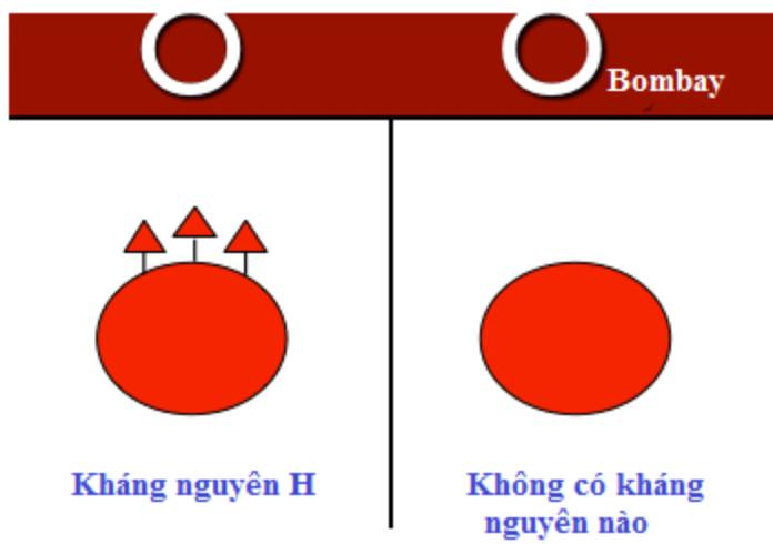 nhóm máu hiếm