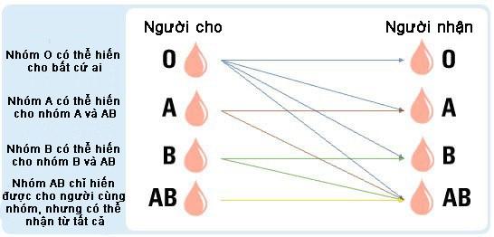 (Khả năng cho nhận của các nhóm máu – Hình ảnh từ internet)