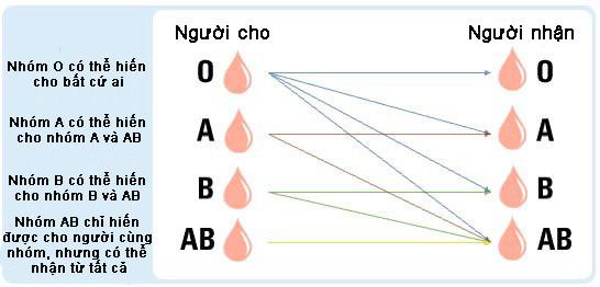 Tỉ lệ nhóm máu hiếm trên thế giới